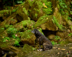 This sweet and friendly Costa Rican dogs waits patiently for a visitor to offer up a snack at the Nauyaca waterfall.