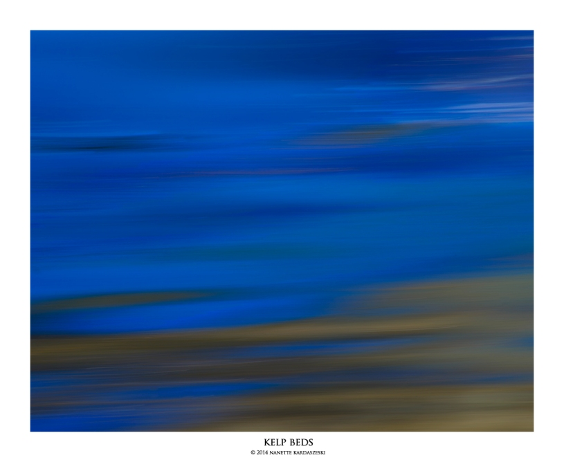 kelpbeds_7233