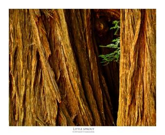 littlesprout_8129