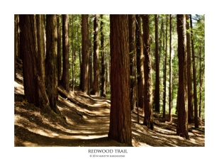 Redwood Trail_066