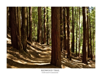 Redwood Trail_066