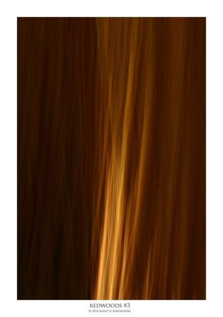 redwood#3_8042