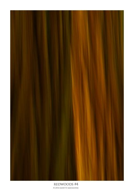 redwood#4