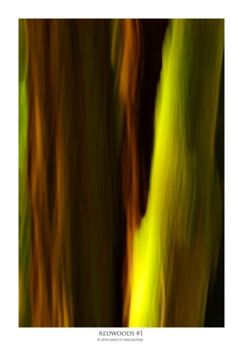 redwoods#1_7951