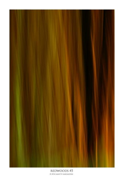redwoods#5_8144