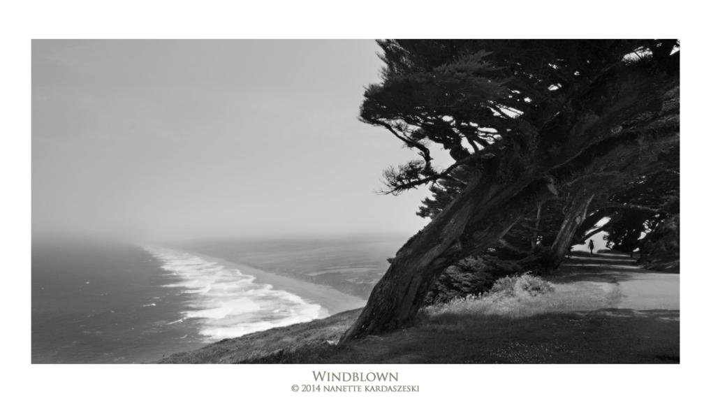 windblown_7718