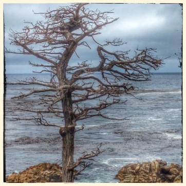 The Other Lone Cypress