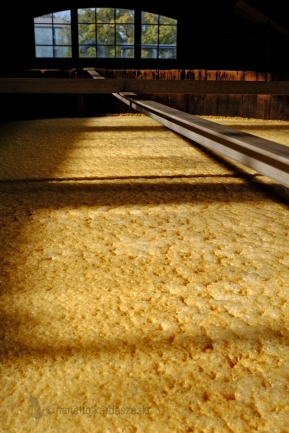Fermenting mash inside the fermentation room at Four Roses.