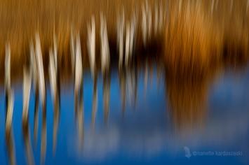 Twin Ponds #3