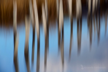 Twin Ponds #1