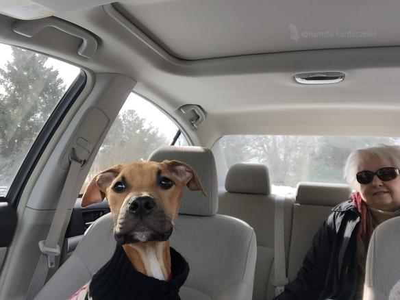 Driving Butterscotch